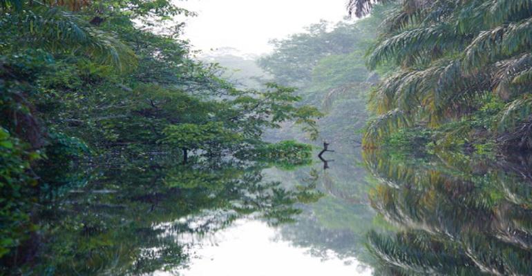 Voyage au Costa Rica: arrêt au parc national de Tortuguero