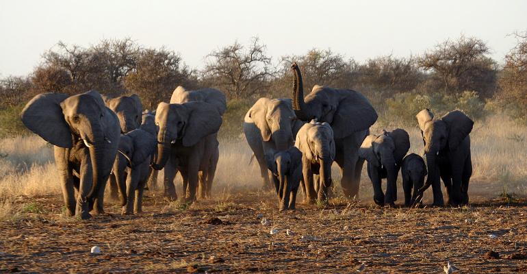 Visiter le parc d'Etosha pour admirer la richesse de la nature de la Namibie